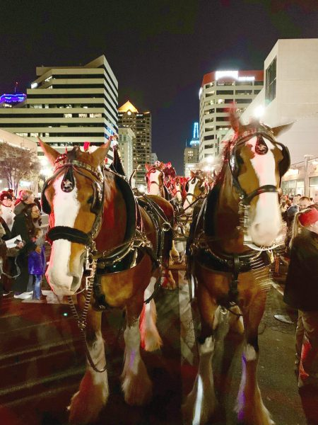 Park City Hosts the Budweiser Clydesdales